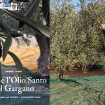 Vico e l'olio santo del Gargano
